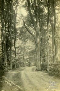 Postcard of Ice House Road Avenue, Lydiard Park by William Hooper, c1880-1910